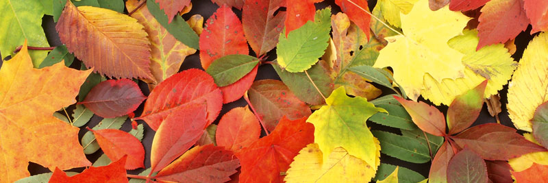 Fototapeta DIMEX Colourful Leaves M-427| 330 x 110 cm