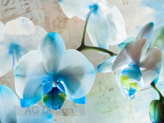Fototapeta AG Design Blue Blossoms FT 1433| 360 x 270 cm
