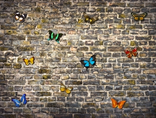 Fototapeta AG Design Wall of Butterflies FT 1435| 360 x 270 cm